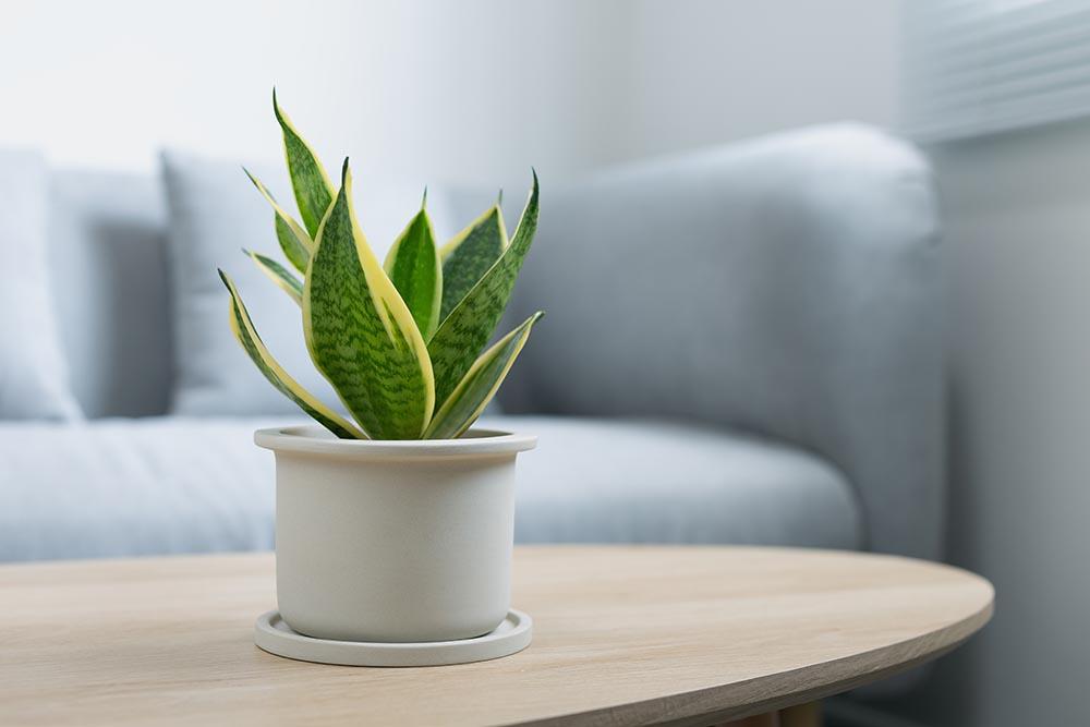 indoor house plants kansas city